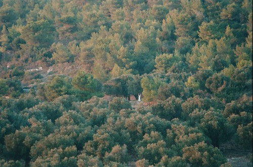 נוף 1997 - צלם לא ידוע